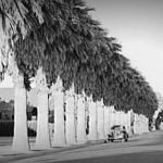 Garfield tree lined street, 1954.